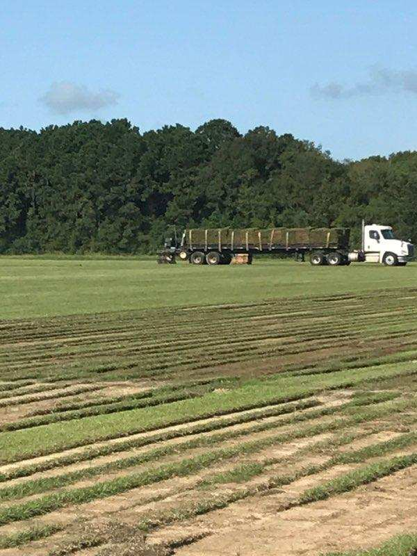Seeding Service Louisiana